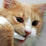 у кошки пахнет изо рта