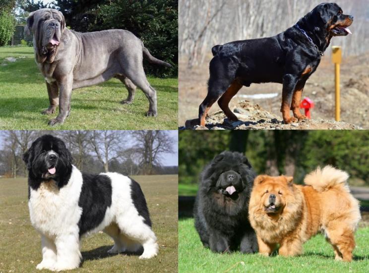 Остеохондроз у собак