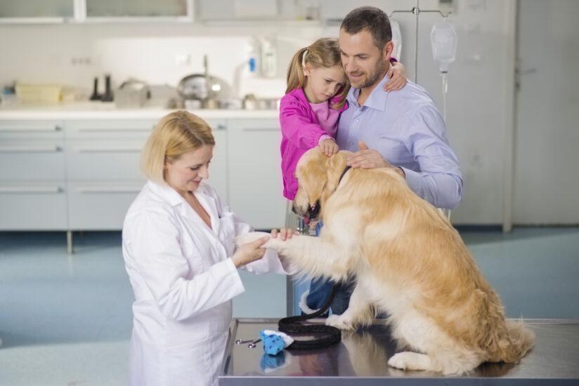 панариций у собак