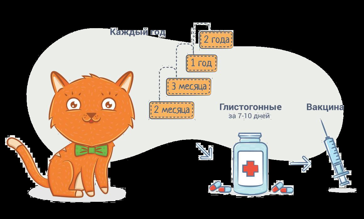 Какие прививки делают кошкам
