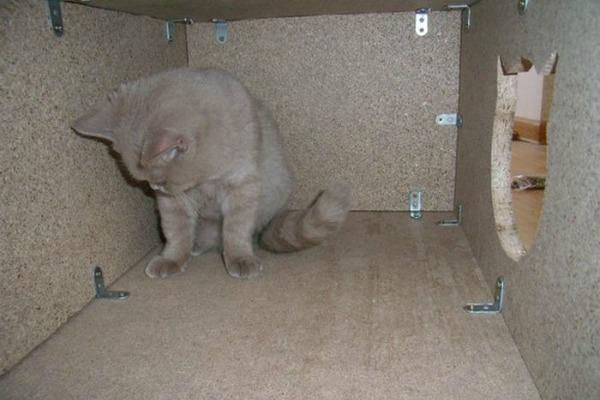 Домик для кошки своим руками