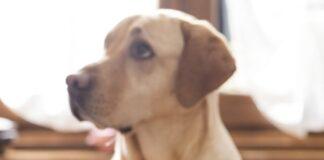 Что делать, если собака не ест