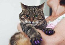 Антицарапки для кошки