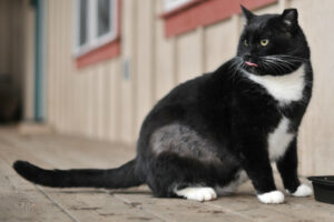 Облысение у кошек