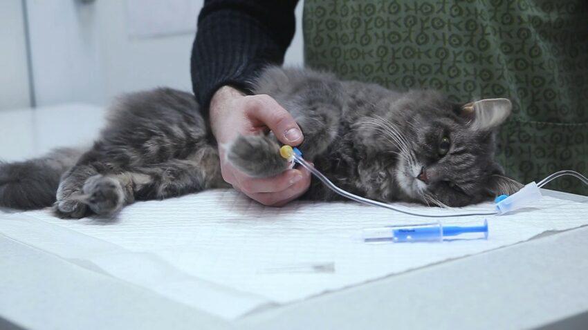 Кошка стала много писать