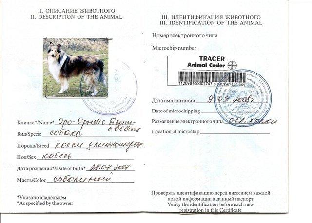 пример заполнения паспорта