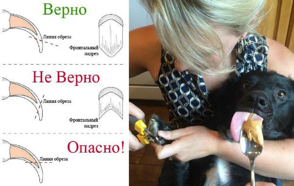 обстричь ногти собаке