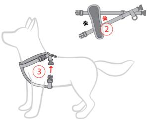 как надеть шлейку на собаку