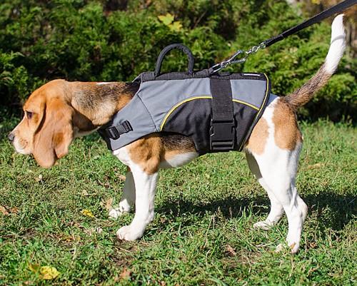 Шлейка для собаки инвалида