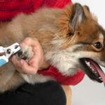как подстричь когти