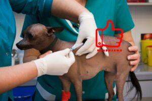 подкожный укол собаке