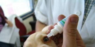Глазные капли для собак