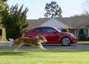 собака бежит за автомобилем