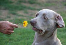 какой запах не любят собаки