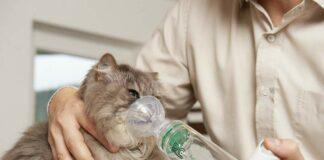 применение спейсера для кошек Аэрокет