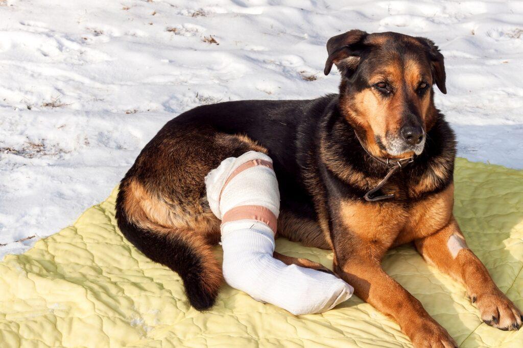 показания для назначения Анальгина собаке