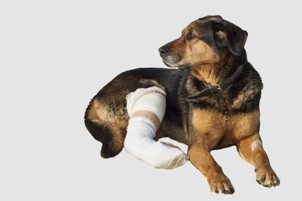обезболивание при переломе у собак