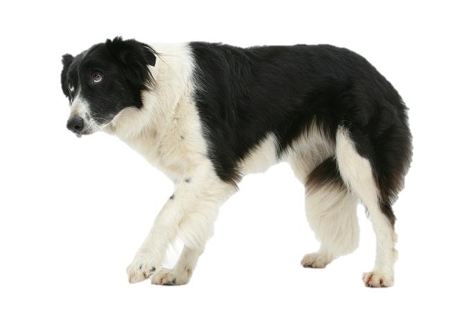 побочные эффекты у собак после уколов