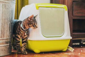 лоток для кошки