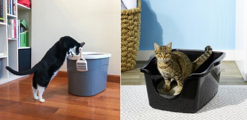 кошачий туалет с высокими бортиками