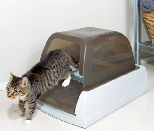 виды лотков для кошек