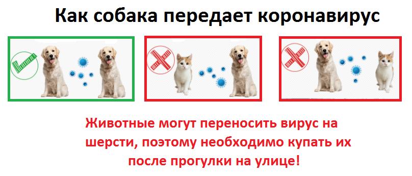 коронавирус у собак коллаж