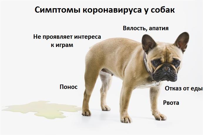 симптомы инфекции у собаки