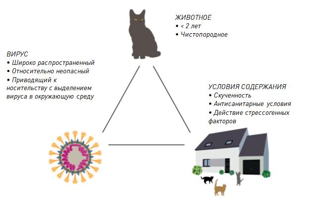 вирус у кота