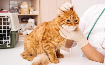 анализы у кошки