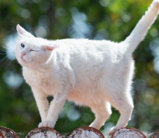 кот трясет головой